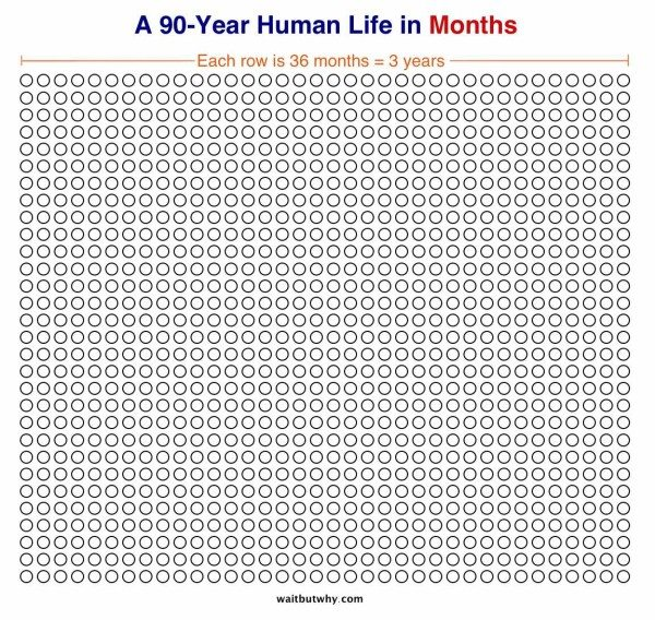 Human Life in Months - Wait But Why