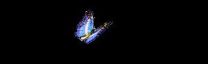 Social Butterfly Digital Advertising